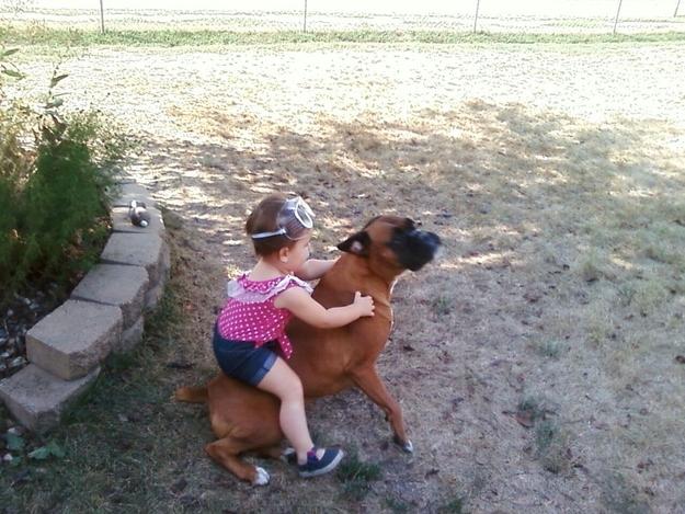 子供と遊ぶかわいい犬