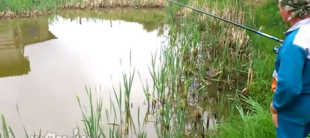 これが本当の泥棒猫!釣り上げた魚を奪うネコの早技がすごい(0:39)