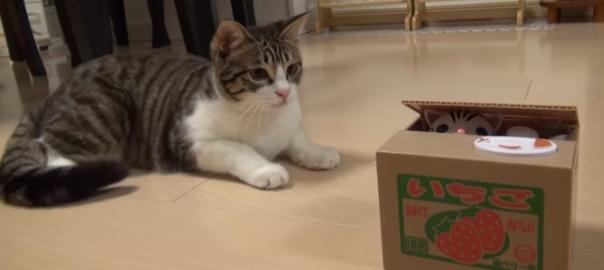 世界が萌えた!猫貯金箱で遊ぶニャンコにメロメロ(1:29)