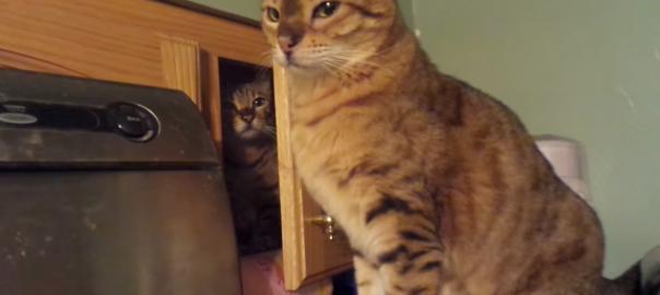 【お命いただきます】完全犯罪をたくらむ必殺仕事猫(0:47)