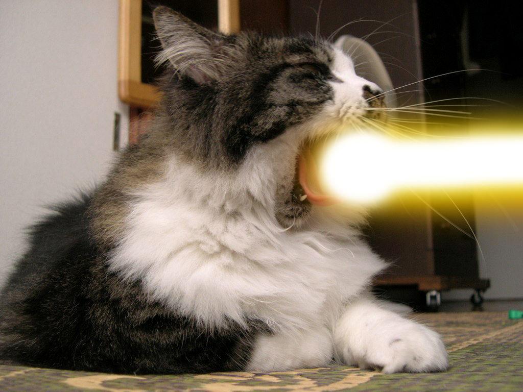 ネコの理解できない謎の行動の画像