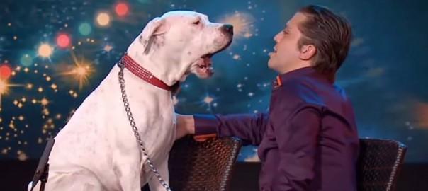 挑戦者はイヌ!?オーディション番組でイヌがホイットニー・ヒューストンを歌う(2:12)