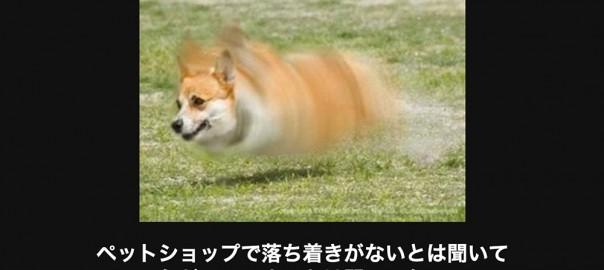 【キケン注意】笑わずにはいられない犬の画像大喜利14選