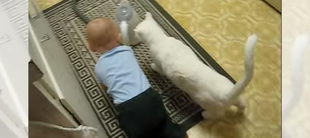 赤ちゃんが大好き過ぎるニャンコの異常な愛情(1:14)