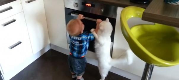 【これは開けちゃダメにゃ!】オーブンにイタズラする男の子を止める白猫(0:34)