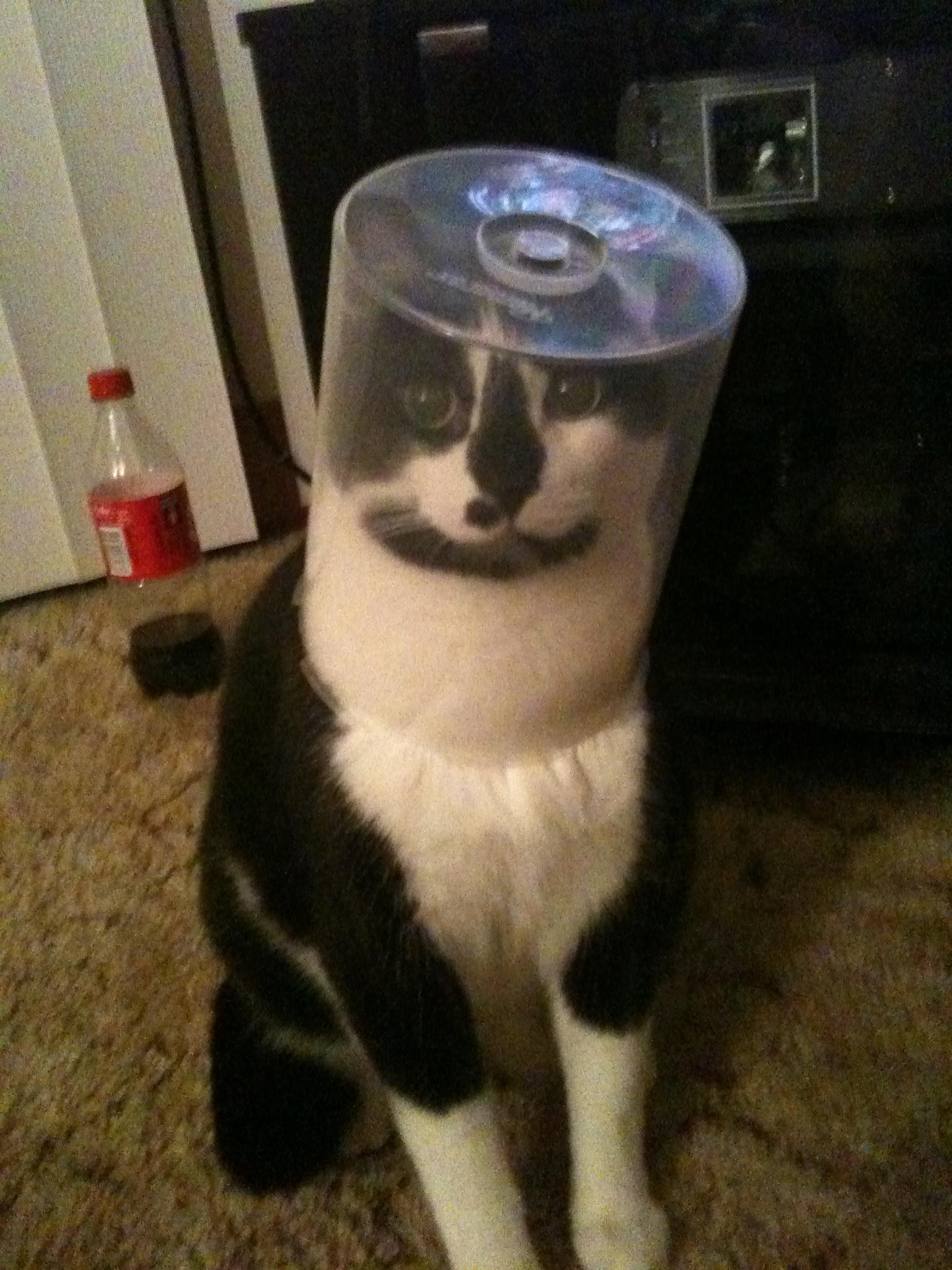 お茶目な猫