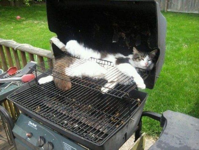 バーベキューに猫