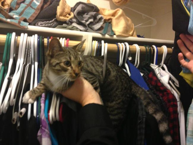 クローゼットの猫