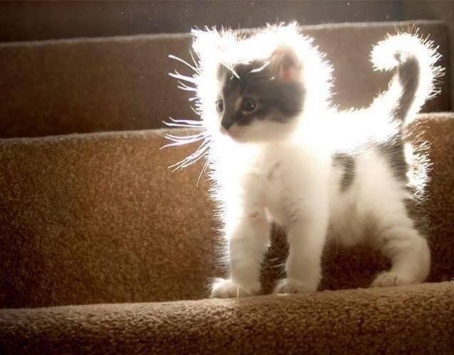 light-kitten
