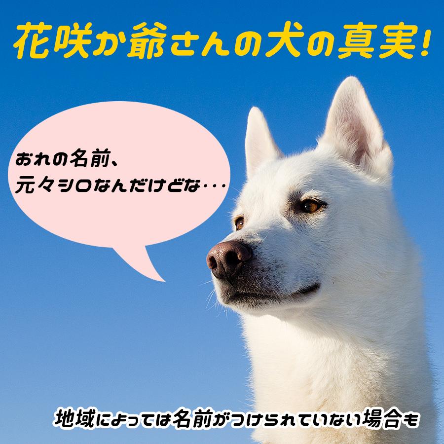 dog4 2