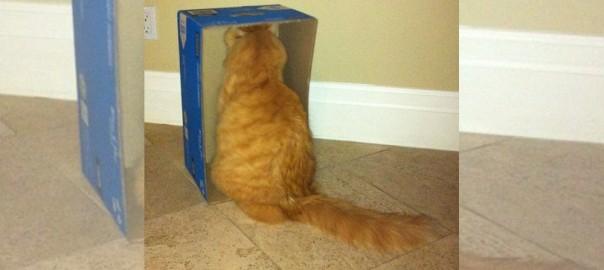 ネコの理解できない謎の行動18選
