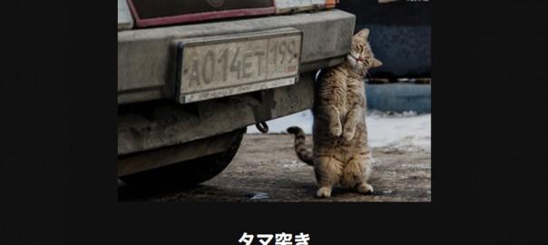 【厳選】電車で読んだら危険なネコ大喜利14選