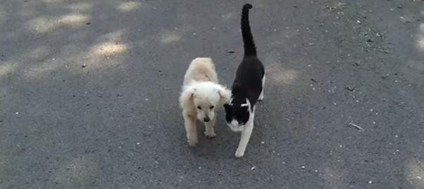 【歩幅を合わせて】視力を失った犬と、それを助ける猫の友情が深い(0:50)