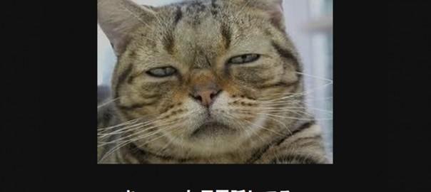 【腹筋破壊】つい吹き出してしまうネコの画像大喜利14選