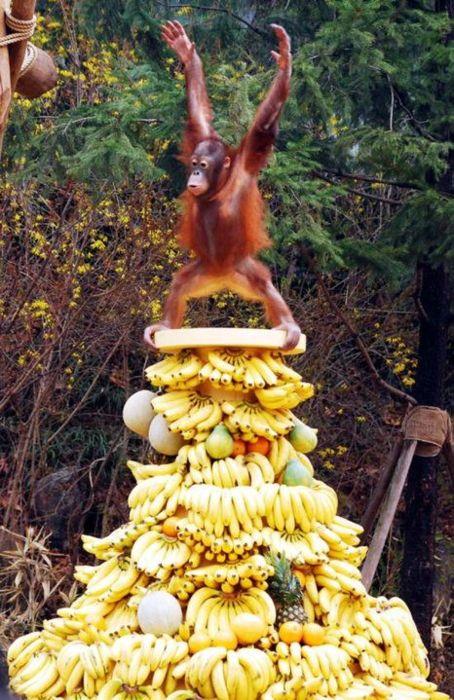 monkey_the_banana_master