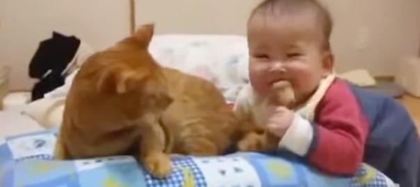 【これぞ神対応】赤ちゃんにしっぽをハムハムされるニャンコ (1:14)