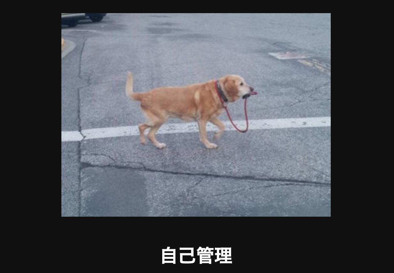 手綱をくわえる犬