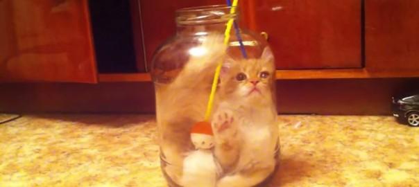ニャンと!猫じゃらしを追い求めて瓶詰めになったニャンコ (2:11)