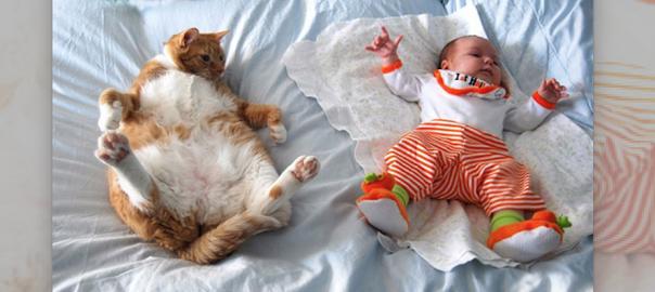 ベビーシッターにはネコを雇うべきだとわかる21の証拠