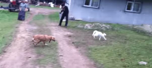 【ついに決着?!】ネコが犬より賢いと判明した瞬間 (0:08)