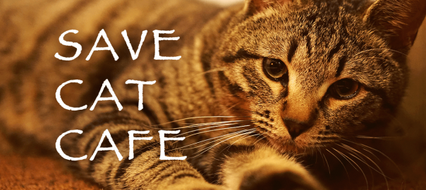 里親制度もある! 保護猫カフェ「SAVE CAT CAFE」が4月1日に大阪でオープン!