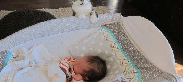 「にゃんだコレは...」ネコが赤ちゃんを初めて見た時のリアクションがプライスレス