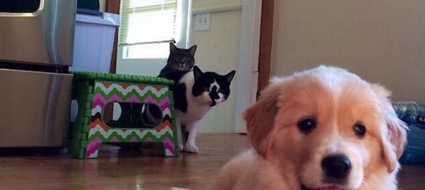 【未知との遭遇】犬が初めて家に来た!その時ネコの反応は・・・16選