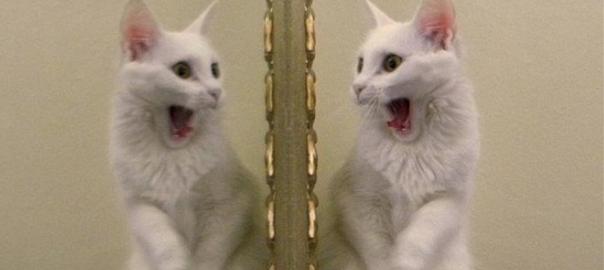見てはいけないものを見た?!ドッペルゲンガーに遭遇したネコたち