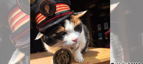 【敏腕ネコ駅長】和歌山の「たま駅長」が海外から人気を集める
