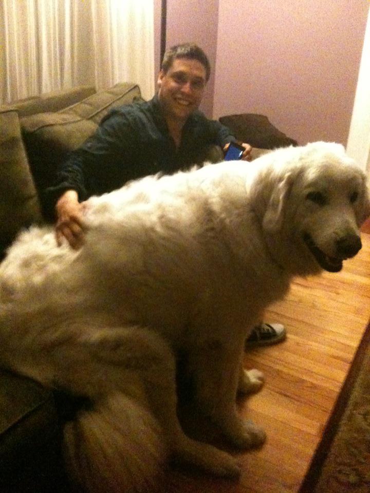 ご主人より大きい犬