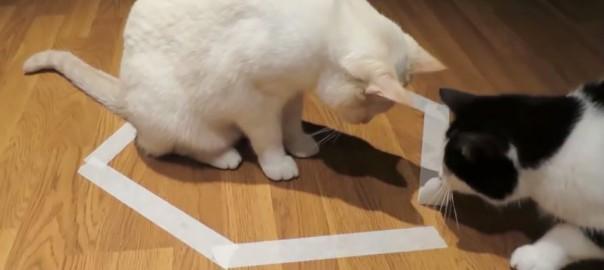 猫転送装置に閉じ込められたニャンコ!決死の大救出劇が始まった (0:43)