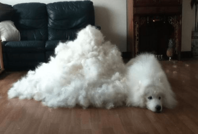 抜け毛が多い犬