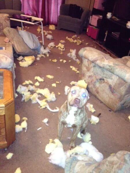 家を荒らした犬