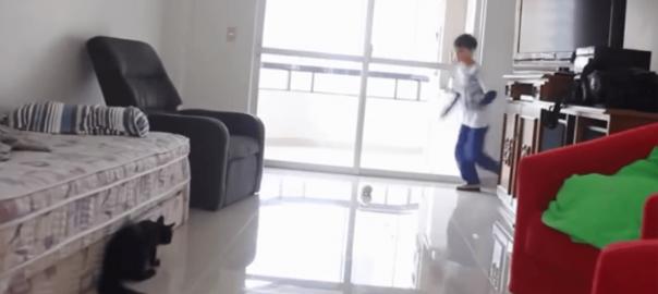 天才ゴールキーパー「ニャンコ」選手がスーパーセーブをお見舞いする!