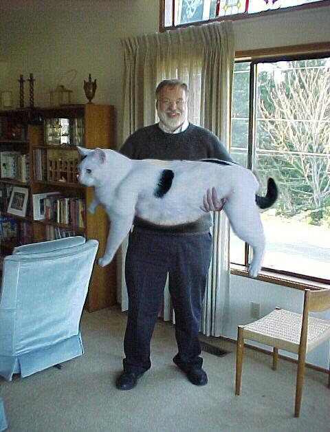 2000_snowballcat
