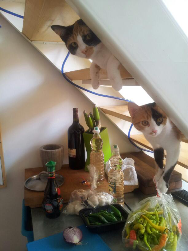 階段から覗くネコ