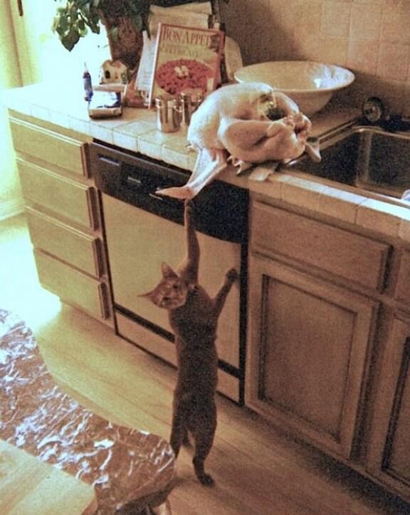 ネコと鶏肉