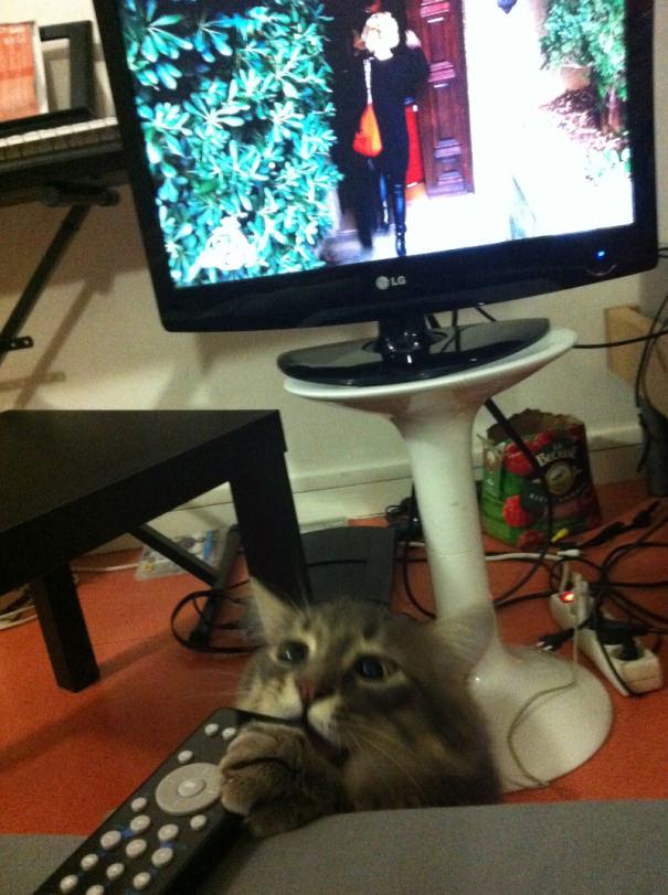 リモコンを食べようとするネコ