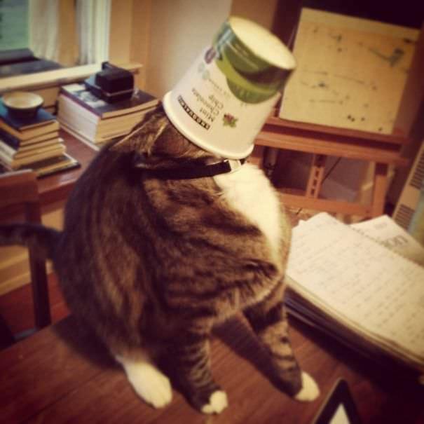 コップに飲まれるネコ