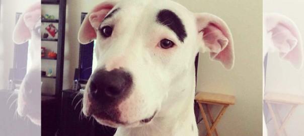 世界で最も変わった模様をもつ18の犬