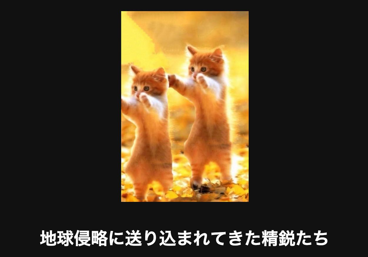 二匹のネコ