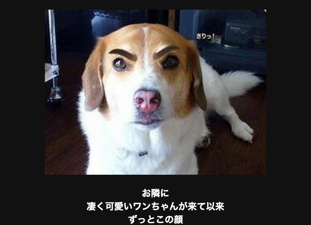 眉毛が凛々しい犬
