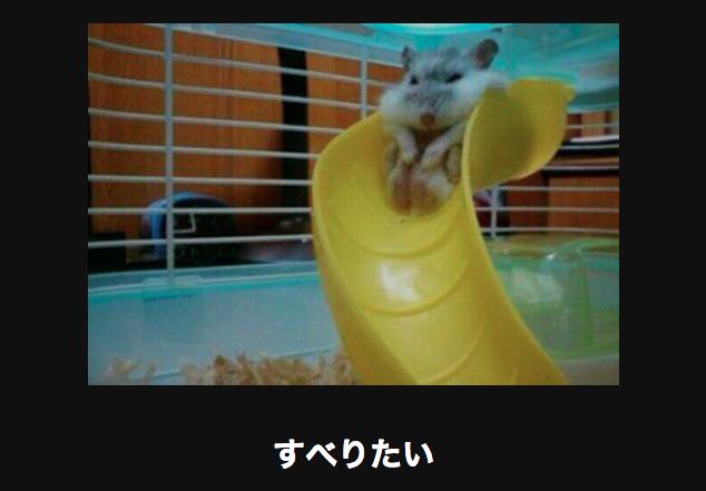 10372 動物