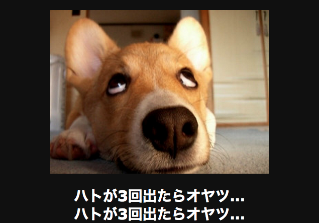 白目を向く犬