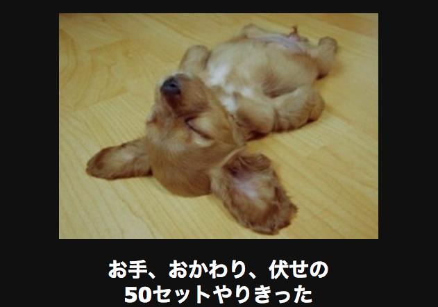 仰向けで寝ている犬