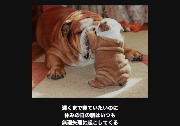 お父さんを邪魔する犬
