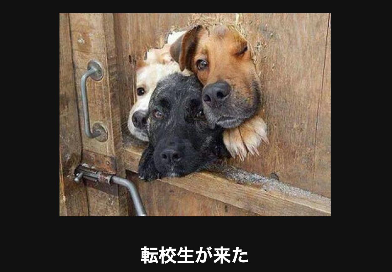 穴から顔をのぞかせる犬