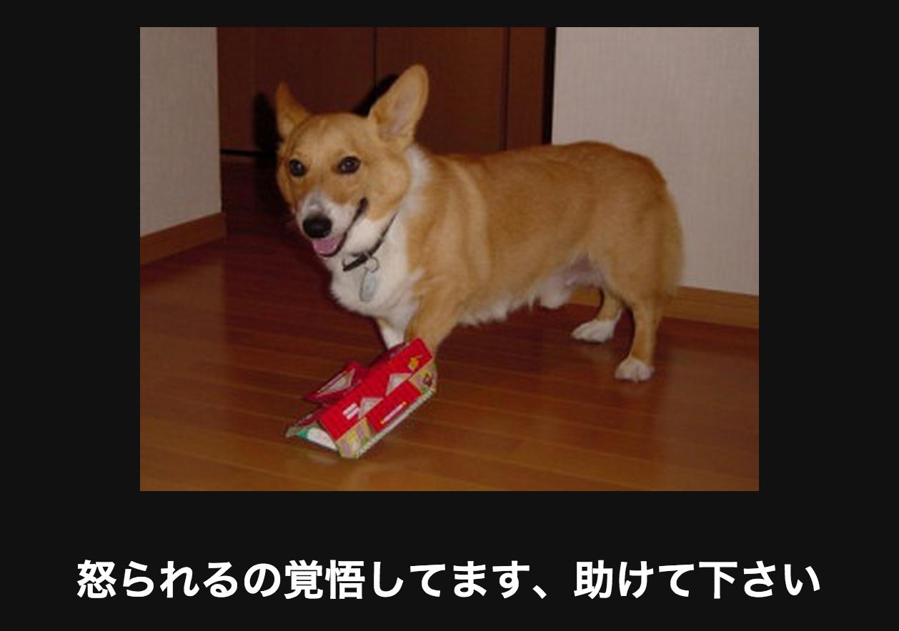 ごきぶりほいほいに捕まる犬