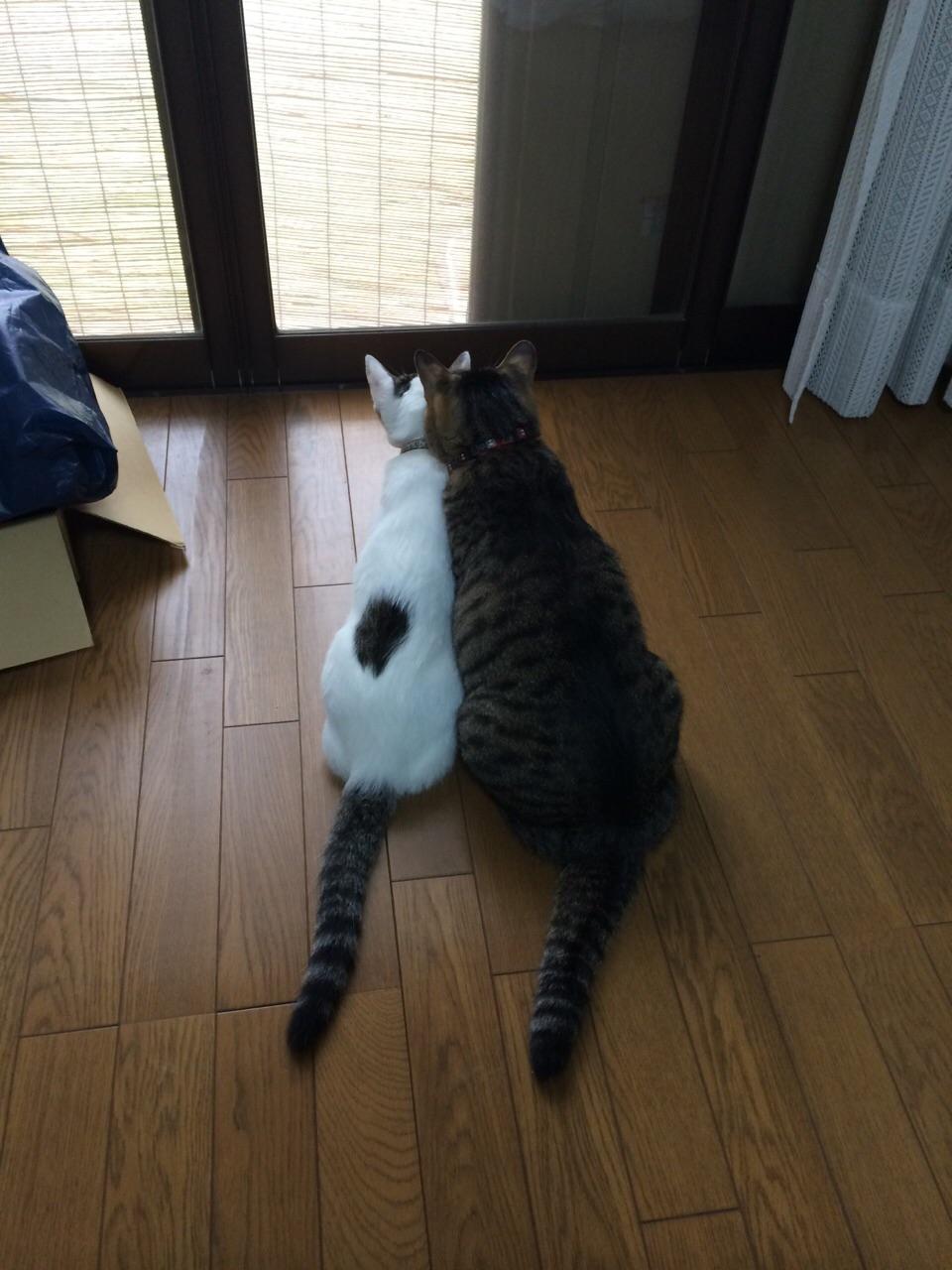 遏ウ莠募鴻諱オ讒倥・豌エ譖・image-1 - コピー