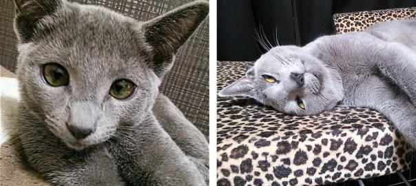 【今日のにゃんこ】寝顔も寝相も凄まじいネコ「アルちゃん」